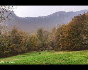 Franzosi_Esplosione d'autunno
